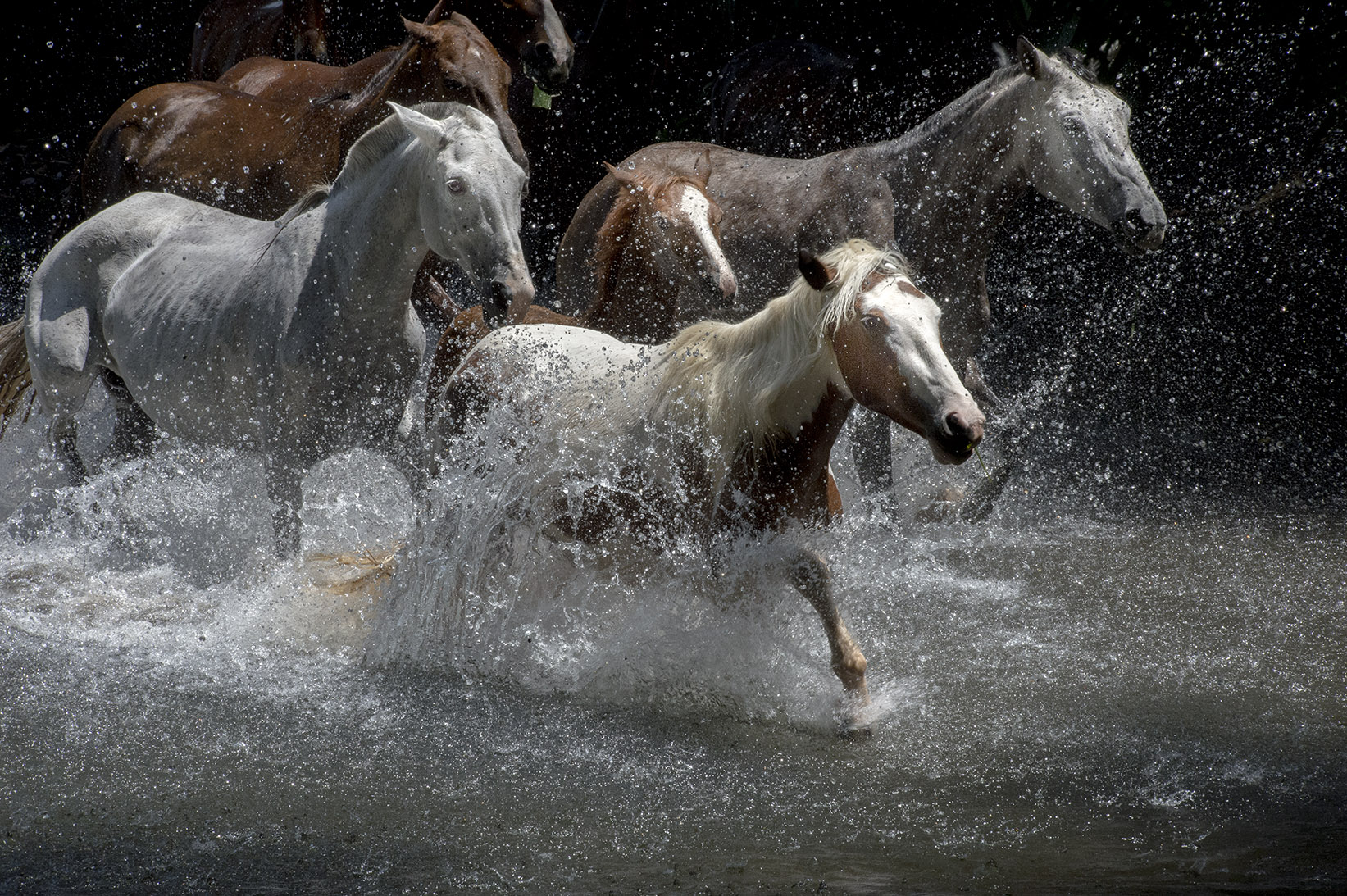 20140224_Horses and Water_0109.jpg